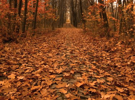 autumn picture of fallen leaves on a path across the wood