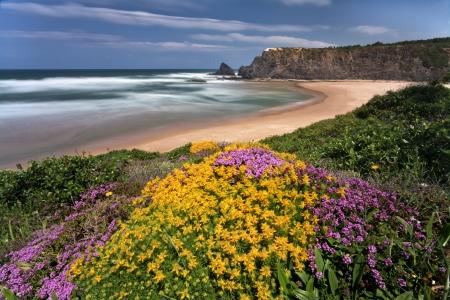 Floral Coastline