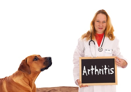 Veterinarian with dog and shield with the word arthritis