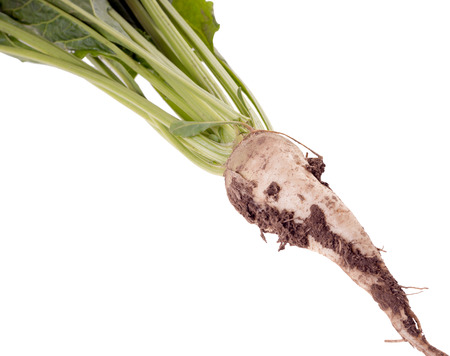 Sugar beet over a white background
