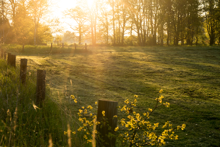 green pasture in the morning light