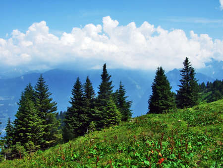 Photo pour Trees and evergreen forests on the slopes between the Alvier mountain and Seeztal valley - Canton of St. Gallen, Switzerland - image libre de droit
