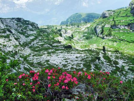 Photo pour Alpine wild flowers on the Churfirstein mountain range in the Toggenburg region - Canton of St. Gallen, Switzerland - image libre de droit