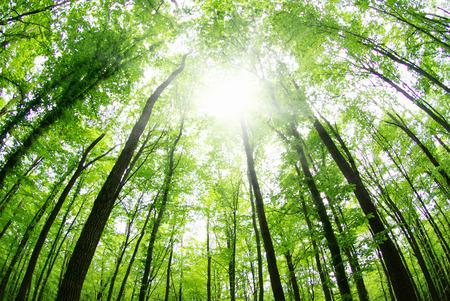 Foto de beautiful forest landscape in the morning - Imagen libre de derechos