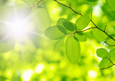 Photo pour green leaves over green background - image libre de droit