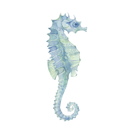 Sea horse isolated on a white background.Vector, watercolor hand drawn  illustration.
