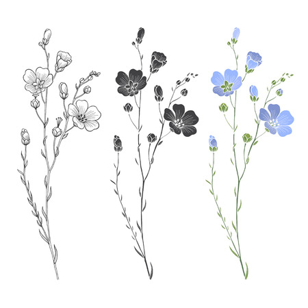 Flax plant with flowers and buds. Vector set. Hand drawn illustration, isolated elements for design on a white background.