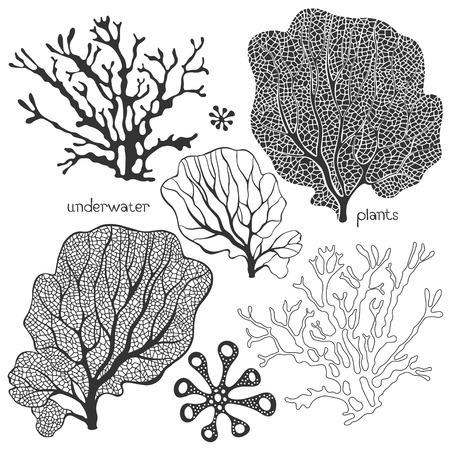 Illustration pour Set of cartoon underwater plants. Vector isolated corals and algae. - image libre de droit