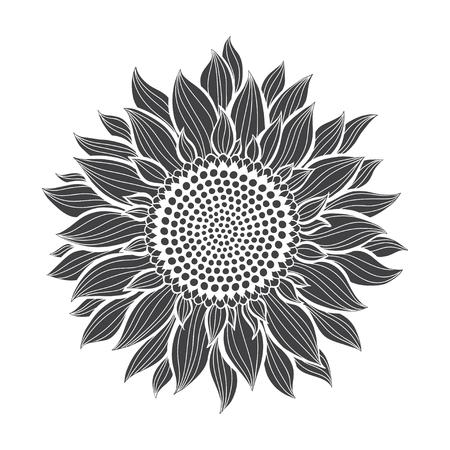 Ilustración de Sunflowers isolated on white background. Botanical vector illustration. Silhouette. - Imagen libre de derechos