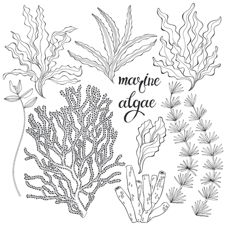 Illustration pour Set of cartoon underwater plants and creatures. Vector illustration,  isolated elements. Set of cartoon underwater plants and creatures. - image libre de droit