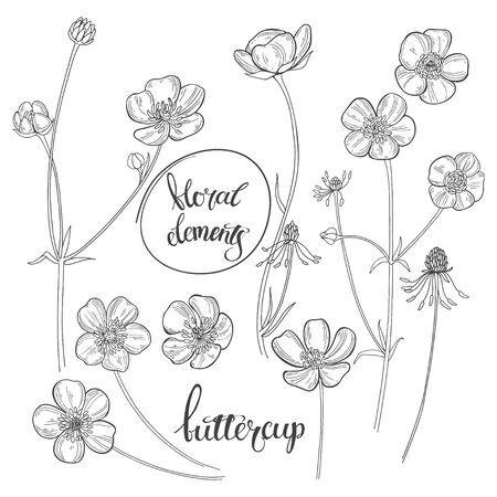 Ilustración de Buttercups  isolated on white background. Black and white vector illustration. Outline. - Imagen libre de derechos