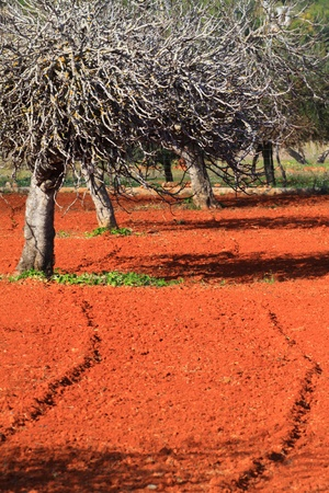 Red cultivated field in Ibiza, Balearic Island, Spain