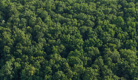 Photo for aerial view of the forest in Poland - Royalty Free Image