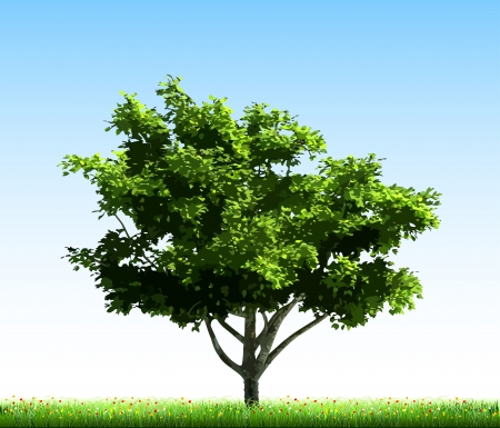 Green tree on grass