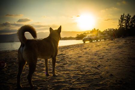 Dog on beach looking sunset.