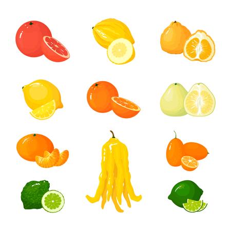 Ilustración de Vector cartoon big Citrus set. Icons isolated. Grapefruit, pomelo, orange, tangerine lemon and lime, uglifruit and citron, kumquat and buddha hand. - Imagen libre de derechos