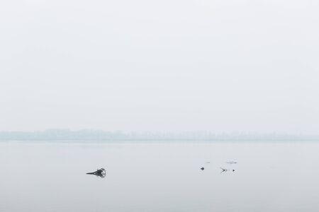 Photo pour Dead trees in the river in winter morning - image libre de droit