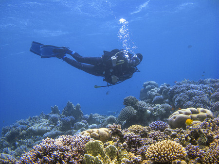 Photo pour Underwater photography of a scuba diver swimming above the coral reef at dive site Ras Abu Galum in Dahab, Egypt. - image libre de droit