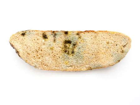 The Moldy bread.