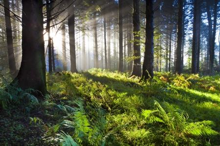 Union Wood sunrise