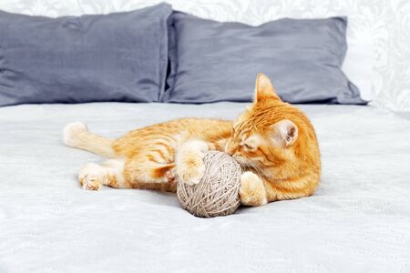Photo for Orange cat playing with a ball of yarn lying on the bed. Shallow focus, blurred background. - Royalty Free Image
