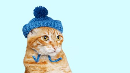 Photo pour Closeup portrait of funny red cat in a blue knitted hat with a pompom isolated on light cyan. Copyspace. - image libre de droit