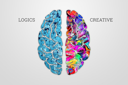 Foto de Illustration of a human brain, top view. Different halves of the human brain. The creative half and logical half of the human mind. - Imagen libre de derechos