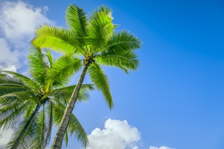 An Image Of Two Nice Palm Trees In The Blue Sunny Sky
