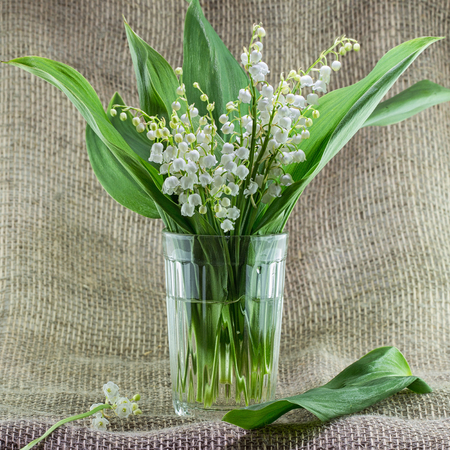 Photo pour A bouquet of lilies of the valley in a simple glass vase on a table. Background with fragrant May lilies of the valley - image libre de droit