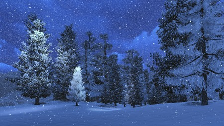 Foto de Winter night in the snowbound pinewood 2 - Imagen libre de derechos