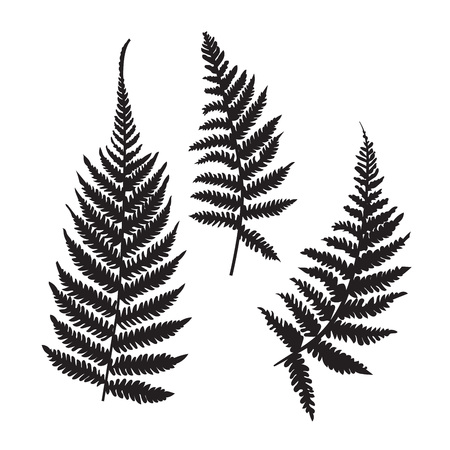 Illustration for Vector fern silhouette collection. Black isolated prints of fern leaves on the white background. - Royalty Free Image