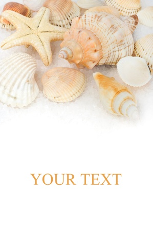 Seashells on the sea salt