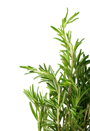 Branches of rosemary on a white background