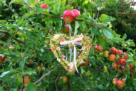 A heart in the apple tree