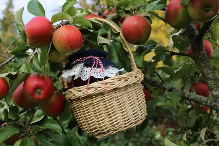 Apple jelly in a basket at the apple tree