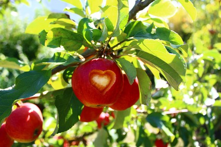 apple with a heart