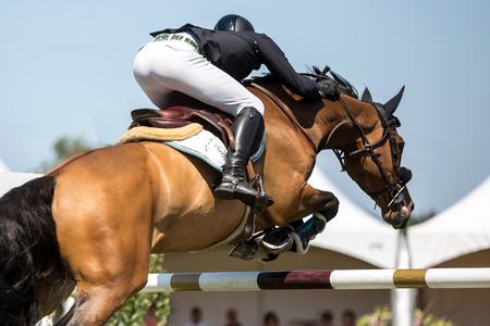Photo pour Equestrian Sports, Horse Jumping, Horse Racing themed photo - image libre de droit