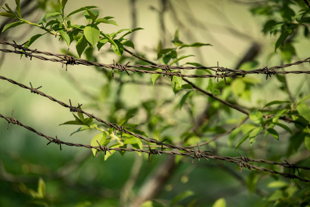 barbed wire fence on green background with tree leaves and vegetation in summer light