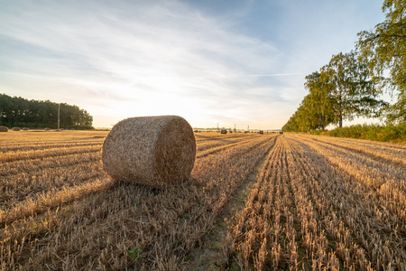Photo for rolls of dry hay in field at countryside autumn weather with sun rays and fog in background. early morning country scene - Royalty Free Image