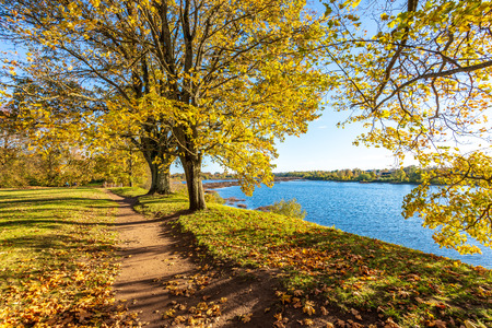 Foto de autumn golden colored park with trees and sun rays in fall in sunny days - Imagen libre de derechos