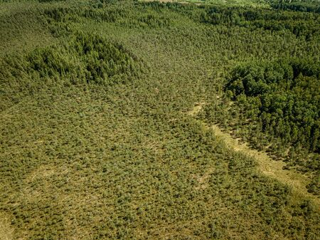 Photo pour endless green forest from drone aerial image in summer. birds eye view texture - image libre de droit