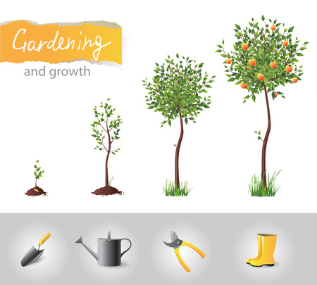 Growing fruit tree and gardening icons