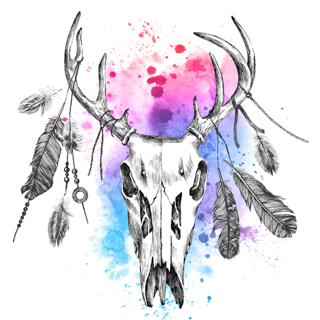 Hand drawn illustration with deer scull and feathers over watercolor background