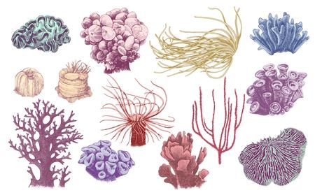 Illustration pour Hand drawn collection of colorful corals. Vector illustration in vintage style - image libre de droit