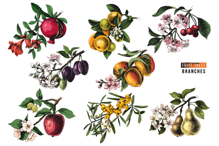 Illustration pour Fruit trees branches - pomegranate, mandarine, cherry, plum, peach, apple, sea buckthorn and pear - with flowers and ripe fruits. Vector illustration - image libre de droit