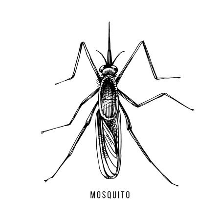 Ilustración de Hand drawn mosquito - Imagen libre de derechos