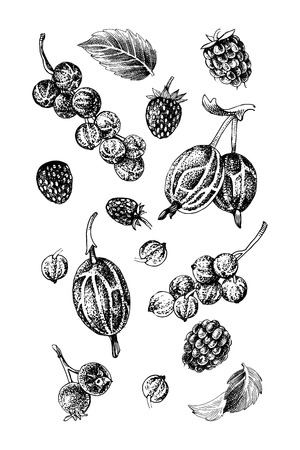 Illustration pour Background with black and white hand drawn berries - raspberry, red currant, gooseberry, wild strawberry, shadberry and mint leaves. Vector illustration - image libre de droit