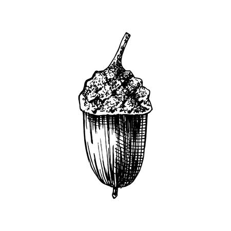 Illustration pour Hand drawn acorn - image libre de droit
