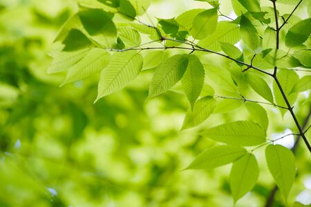 Photo pour Look up at the green - image libre de droit