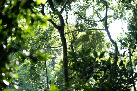 Photo for A snapshot of the bright forest on a sunny day - Royalty Free Image